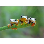 Puzzle   Friendly Frogs