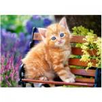 Puzzle  Castorland-018178 Ginger Kitten