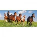 Puzzle  Castorland-060351 Horse Paradise