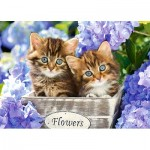Puzzle  Castorland-066087 Chatons