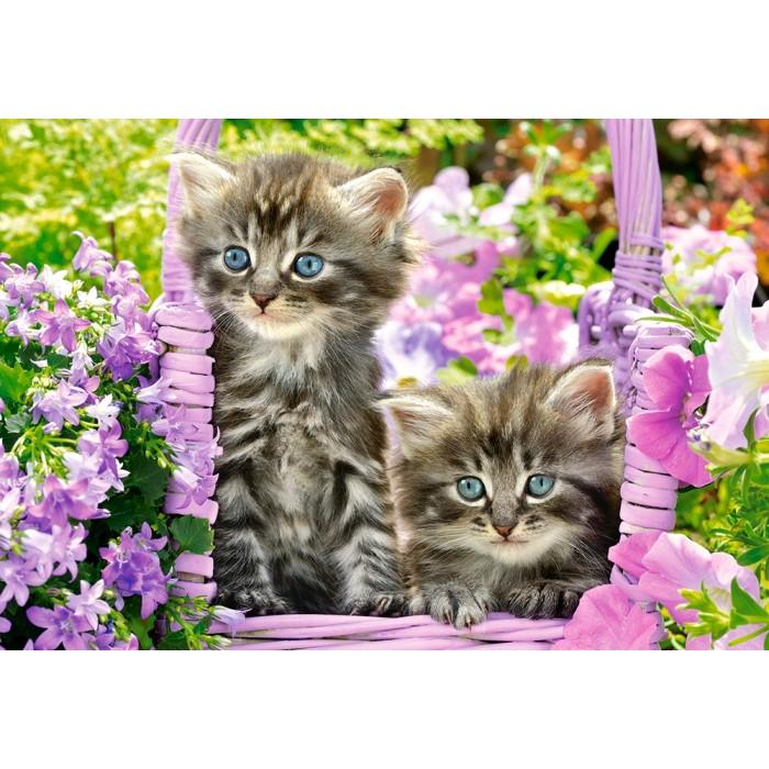 Kittens in Summer Garden