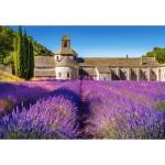 Puzzle  Castorland-104284 Champ de Lavande en Provence, France