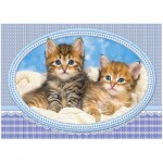 Puzzle  Castorland-13111 Kittens Curling up on a Blanket