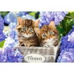 Puzzle  Castorland-151561 Chatons dans les Fleurs
