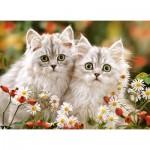 Puzzle  Castorland-222131 Persian Kittens