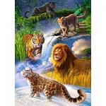 Puzzle  Castorland-27415 Big Cats