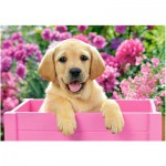 Puzzle  Castorland-52226 Labrador Puppy in Pink Box