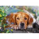 Puzzle  Castorland-52622 Golden Innocence