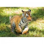Puzzle  Clementoni-27998 WWF - Tigre