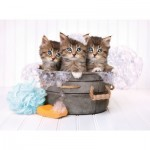 Puzzle  Clementoni-35065 Chatons