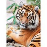 Puzzle  Clementoni-39295 Tigre de Sumatra