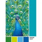 Puzzle  Clementoni-39495 Pantone - Peacock Blue