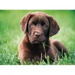 Puzzle   Labrador Chocolat