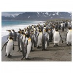 Puzzle   Penguins