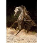 DToys-65940-MH01 Puzzle spécial / Difficile : Cheval arabe n°1