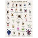 Puzzle  Eurographics-6000-0041 Araignées et arachnides