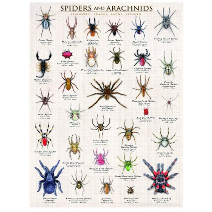 Araignées et arachnides