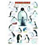 Puzzle  Eurographics-6000-0044 Les pingouins