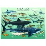 Puzzle  Eurographics-6000-0079 Requins