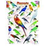 Puzzle  Eurographics-6000-0126 Les perroquets