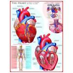 Puzzle  Eurographics-6000-0257 Le coeur