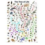 Puzzle  Eurographics-6000-0282 L'évolution - l'arbre de vie