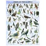 Puzzle  Eurographics-6000-0316 Oiseaux de proies et hiboux