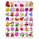 Puzzle  Eurographics-6000-0593 Roses
