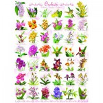 Puzzle  Eurographics-6000-0655 Orchidées