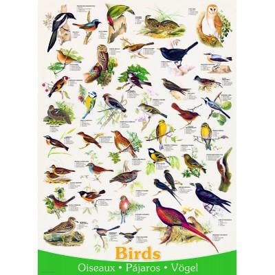 Puzzle Eurographics-6000-1259 Affiche sur les Oiseaux
