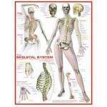 Puzzle  Eurographics-6000-2014 Système Squelettique
