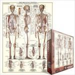 Puzzle  Eurographics-6000-3970 Le Système Squelettique