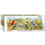 Puzzle  Eurographics-6010-5338 Oiseaux de Jardin