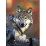 Puzzle  Grafika-Kids-00515 Loup