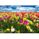 Puzzle  Grafika-Kids-00684 Pièces Magnétiques - Tulipes