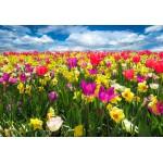 Puzzle  Grafika-Kids-00685 Pièces XXL - Tulipes
