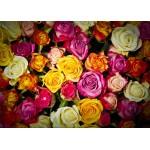 Puzzle  Grafika-Kids-00942 Pièces magnétiques - Roses