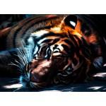 Puzzle  Grafika-Kids-00961 Tigre