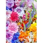Puzzle  Grafika-Kids-01171 Pièces magnétiques - Explosion de Fleurs