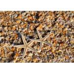 Puzzle  Grafika-Kids-01231 Coquillages et Etoiles de Mer
