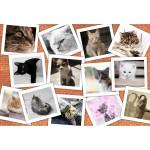 Puzzle  Grafika-Kids-01622 Pièces XXL - Chats