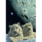 Puzzle  Grafika-Kids-01667 Pièces magnétiques - Schim Schimmel - Lair of the Snow Leopard