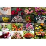 Puzzle  Grafika-Kids-01939 Collage - Fleurs