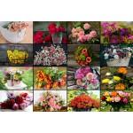 Puzzle  Grafika-Kids-01942 Pièces XXL - Collage - Fleurs