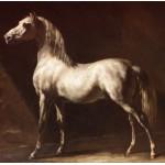Puzzle  Grafika-00427 Théodore Géricault : Cheval Arabe Gris-Blanc