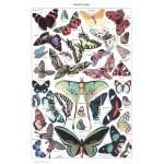 Puzzle  Grafika-00588 Illustration du Larousse pour Tous : Papillons, 1907-1910