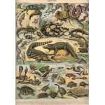 Puzzle  Grafika-00589 Illustration du Nouveau Larousse Illustré : Reptiles , 1897-1904