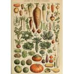 Puzzle  Grafika-00593 Illustration du Larousse pour Tous : Légumes et Plantes Potagères , XIXè Siècle