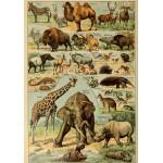 Puzzle  Grafika-00594 Illustrations du Larousse pour Tous : Mammifères , XIXè Siècle
