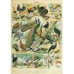 Puzzle  Grafika-00603 Illustration du Nouveau Larousse Illustré : Oiseaux , XIXè Siècle